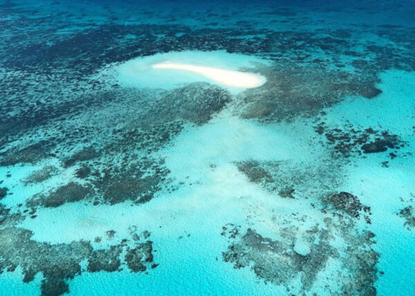 GBR Aerial Diving On The GBR June2019