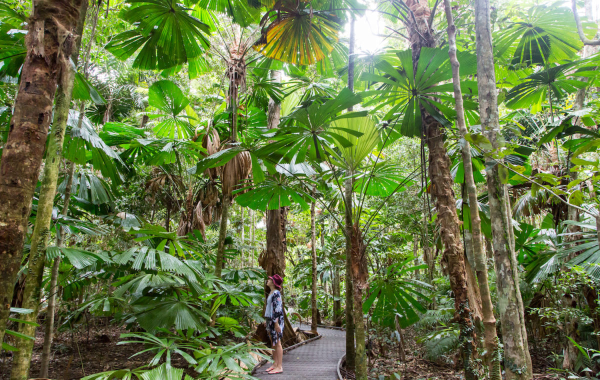 Getting to Port Douglas and Daintree