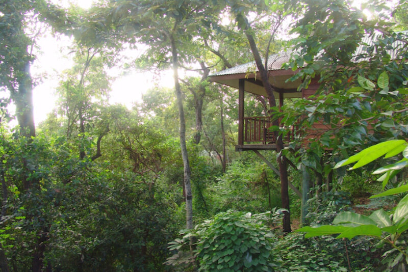 Port Douglas Daintree lodge accommodation