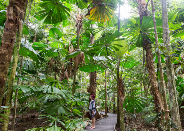 Daintree Boardalk - 9 Free Things to do in Port Douglas Daintree