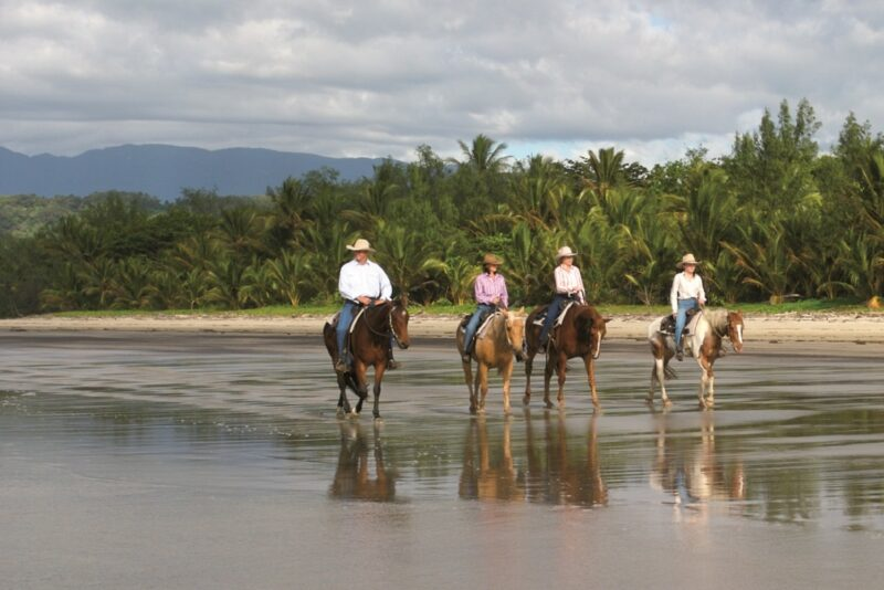 Daintree luxury blog cape trib horseriding