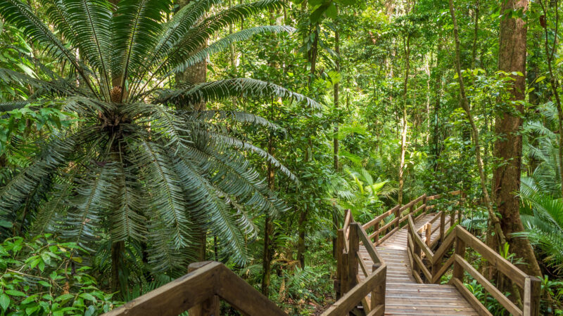 Jindalba Boardwalk -Daintree Boardalk - 9 Free Things to do in Port Douglas Daintree